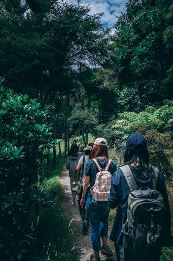 people wearing backpacks walking on pathway near green leaf 917510 341x512 - Studia w UK: South Wales University! Geologia kierunkiem akredytowanym przez The Geological Society of London!