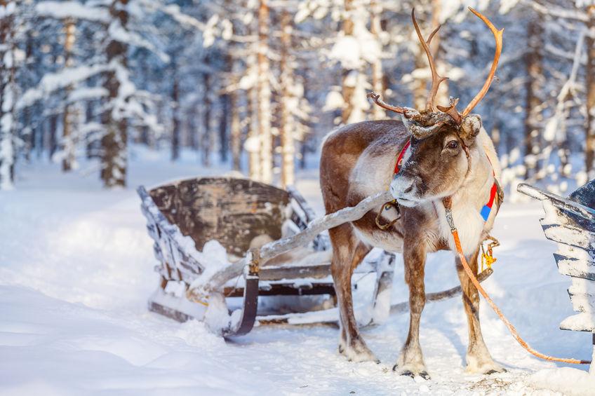 65202718 s - Studia w Finlandii